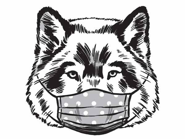 Wolf wearing a mask.
