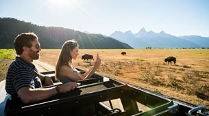 Couple Looking At Bison In A Safari Vehicle.